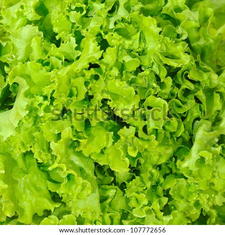 Image of lettuce as a background, closeup,macro - stock photo