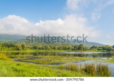 image of lotus in pond and mountain in background.