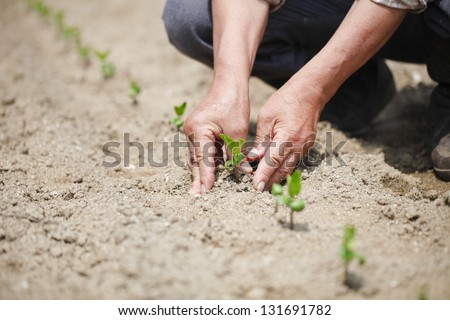 Image of male hands transplanting young plant - stock photo