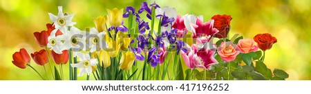 image of many flowers in the garden closeup - stock photo