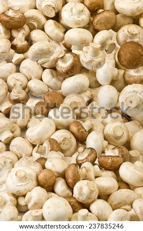image of many mushrooms as background closeup - stock photo