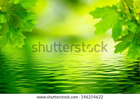 image of maple branches over the water - stock photo