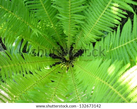 image of nice pattern from green leaves of fern - stock photo