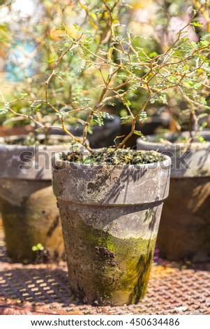 Image of old rustic plant pots.