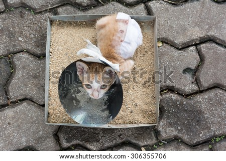 Image of orange cat with veterinary cone on its head sit in sand tray, after surgery. - stock photo