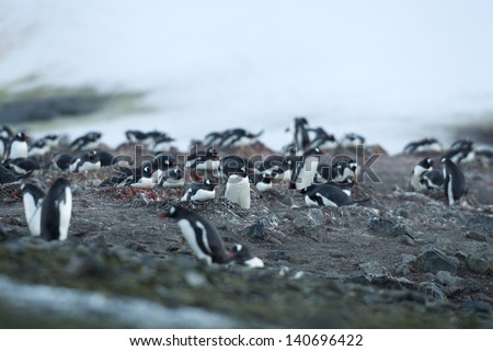 Image of penguins in Antarctic region. - stock photo