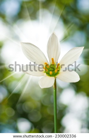 image of single beautiful flowers closeup