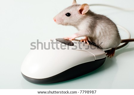 Image of small pet touching to the computer mouse