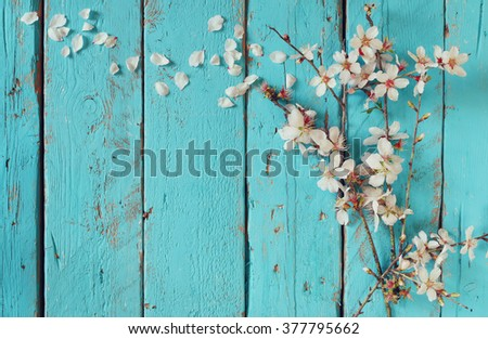 image of spring white cherry blossoms tree on blue wooden table. vintage filtered image  - stock photo