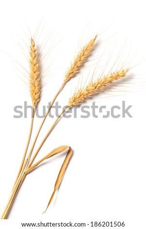 Image of stalks of wheat isolated on white background. - stock photo