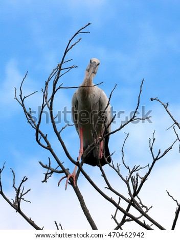 Image of stork perched on tree branch