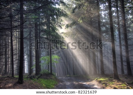 Image of the coniferous forest early in the morning - early morning fog - stock photo