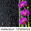 image of the spa concept �three orchid, stones, bamboo grove - stock photo