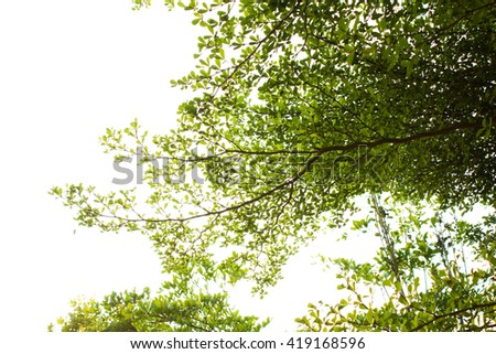 image of Trees in  Garden with sky.