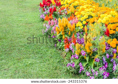 image of Various color flower background. - stock photo