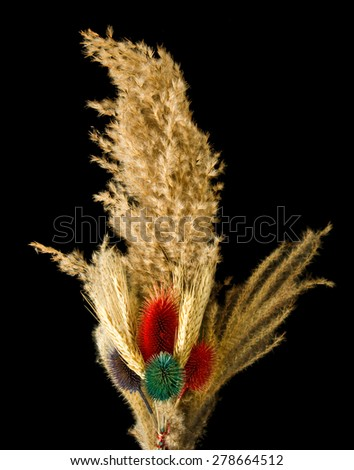 Image of various dried plants - stock photo