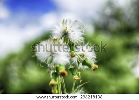 image of white flower, nice bloom with blue sky and cloud. Blurred and abstract concept