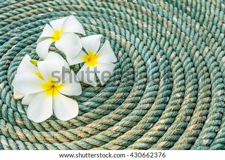 Image of white frangipani on coiled rope