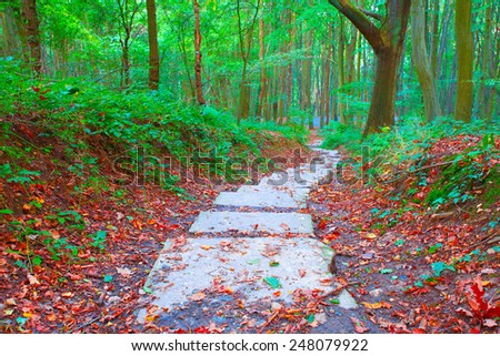 Image showing a hiking trail through a dark forest - stock photo