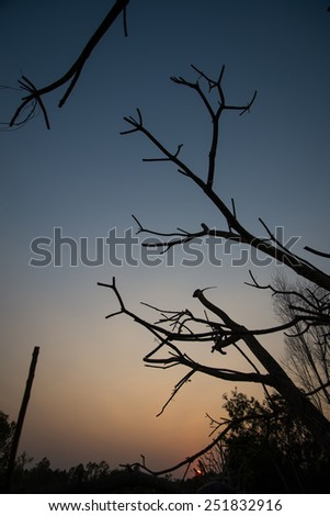 Image twigs Silhouette at sunset.