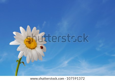 Images of the ladybug is sitting on camomile against the blue sky - stock photo