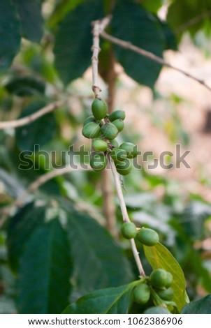 Pure garcinia cambogia burn and cleanse catalyst plus diet