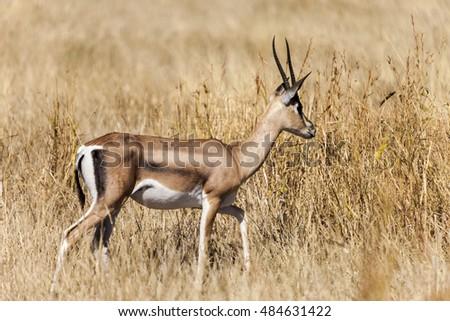 whitetail deer buck doe breeding having stock photo. Black Bedroom Furniture Sets. Home Design Ideas
