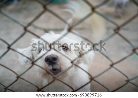 imprison a dog in a cage