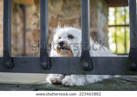 Imprisoned