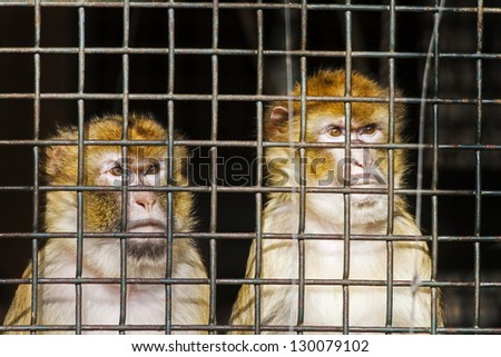 in a cage, prisoners