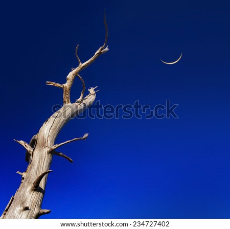 In a deep blue sky a crescent moon hangs precariously with ominous looking dead tree branches snaking skywards - stock photo