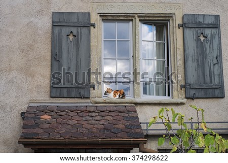 In a window sill of a house in the Swiss city of Thun (Switzerland), a cat is relaxing and enjoying a late summer day in September.