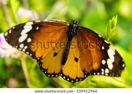 In an outdoor butterfly garden down. - stock photo