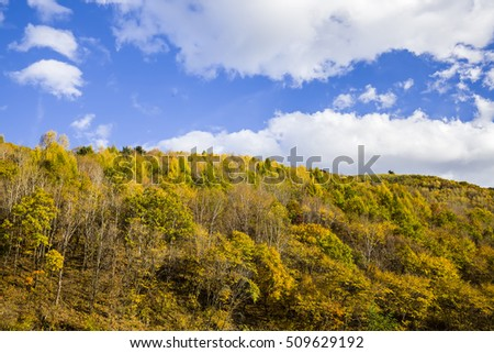 In autumn, trees on the hillside