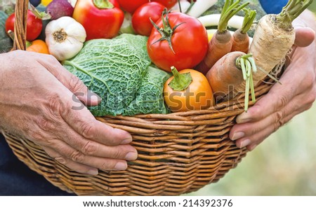 In hands of farmers is wicker basket full of organic vegetables - stock photo