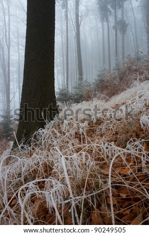 In misty late autumn wood with wood grass - stock photo