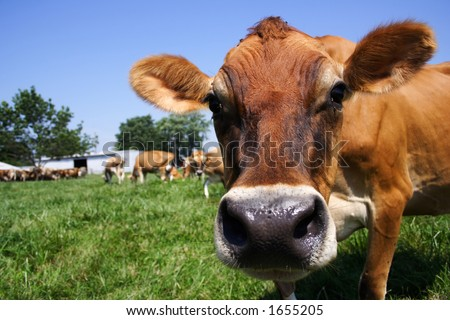 In pasture - stock photo