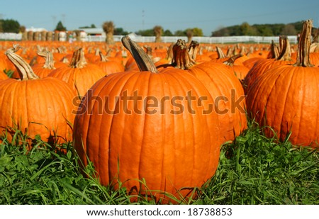 In Search of the Great Pumpkin - stock photo