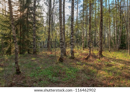 In spring wood. A spring landscape