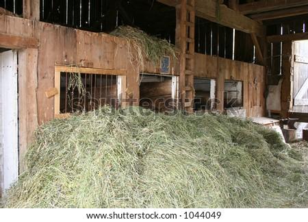 In the barn - stock photo