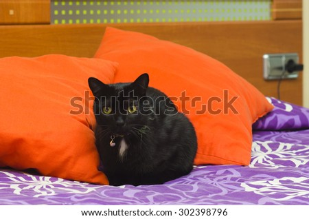 In the bed - stock photo