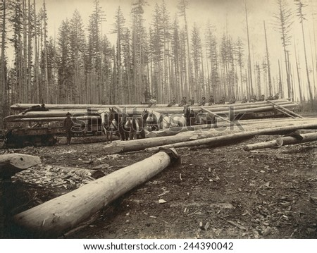 In the Cascade Mountains near Seattle, Washington, workers load 120 foot long logs with sharpened ends, that will become fish trap piles. Ca. 1899. - stock photo