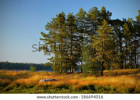 In the forest, Karelia, Russia - stock photo
