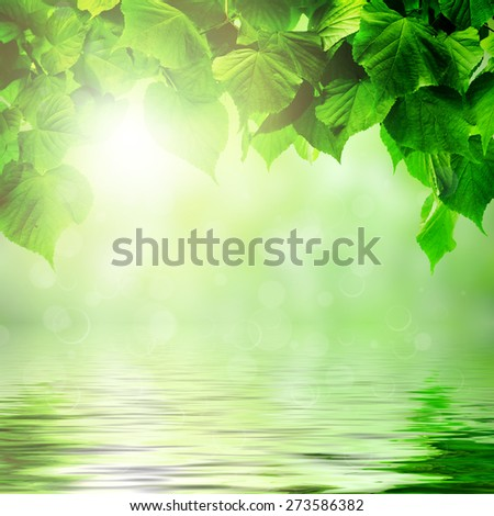 in the forest leaves hanging over the water on the sun backgrounds - stock photo