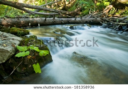 In the forest with a blurred  stream and fallen trees - stock photo