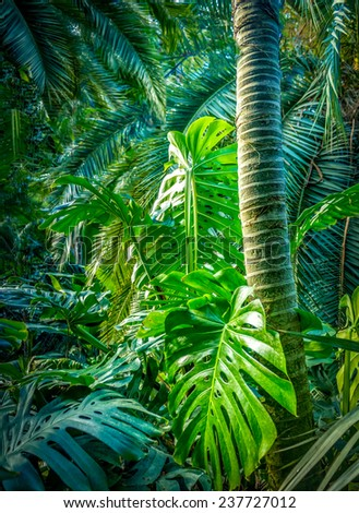 In the jungle - stock photo