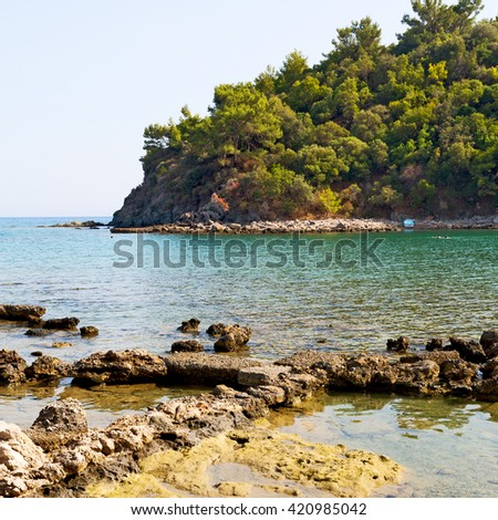 in the mediterranean see turkey europe  pine plant and tree