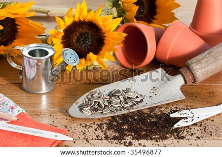 In the potting shed with sunflower seeds and plants with watering can and tools - stock photo