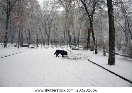 In the Ukrainian capital, a large space is occupied by parks and forests and groves, in which like walking women with children, lovers, young people, older people-grandparents and walk their dogs pets - stock photo
