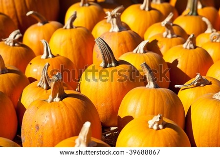 In the United States, the carved pumpkin was first associated with the harvest season in general, long before it became an emblem of Halloween.